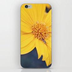 Yellow Jacket Hides iPhone & iPod Skin