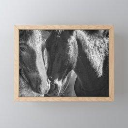Bachelor Stallions - Pryor Mustangs - BW Framed Mini Art Print