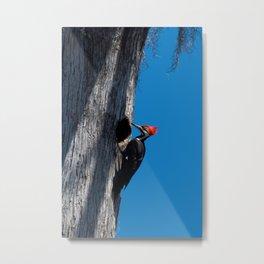 Bayou Bird (Pileated Woodpecker) Metal Print