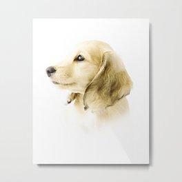 Cute Dachshund Puppy Metal Print