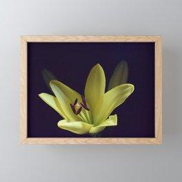 Asiatic Yellow Lily Framed Mini Art Print