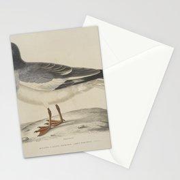 2219 Mouette a queue fourchue Larus furcatus26 Stationery Cards