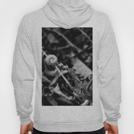 The Fiddlehead in Black and White Hoody