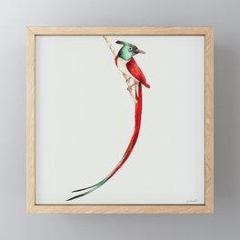 Tail Bird II Framed Mini Art Print