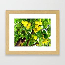 when life gives you lemons... Framed Art Print