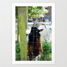 Hadleigh Farm Art Print