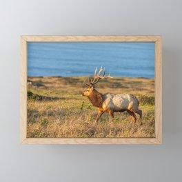 Tule Elk Bull Framed Mini Art Print