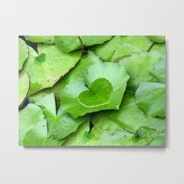 Water Lily Green Leaves and Heart Shaped Water Photography Metal Print