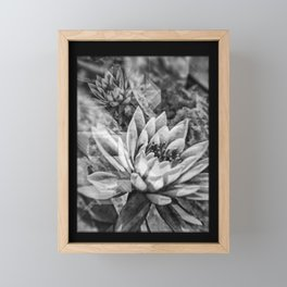 Black and White Lotus Flowers Framed Mini Art Print