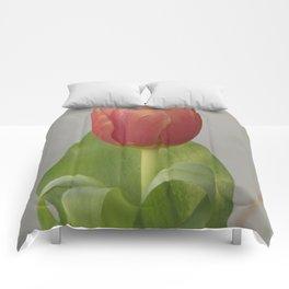 Tulip Comforters