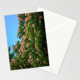 Mimosa Branch Stationery Cards
