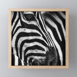 Wild Animals Squin Pillow Zebra Framed Mini Art Print