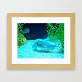 Cuddle Fish Framed Art Print