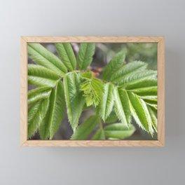 Spring Green Framed Mini Art Print