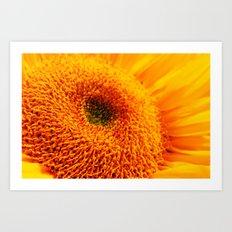 Sunny Flower Art Print