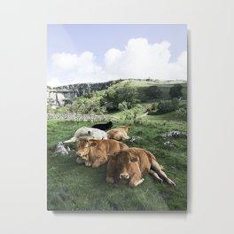The cows Metal Print