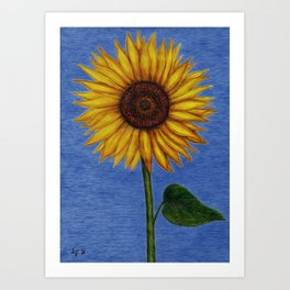 Sunflower by Lars Furtwaengler | Ink Pen | 2011 Art Print