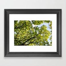 Peaceful Forest Framed Art Print