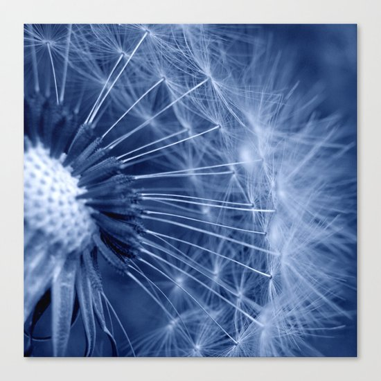 blue dandelion II Canvas Print