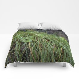 Dew Covered Coastal Plants on the Cliffs Comforters