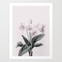 Flowers near me 14 Art Print