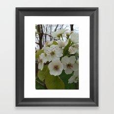 Plum Blossoms Framed Art Print