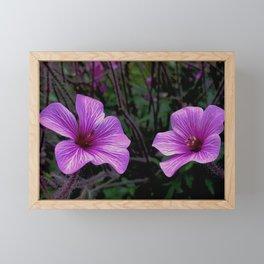 Pink Hibiscus Framed Mini Art Print