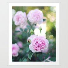 Magic Hour Roses Art Print