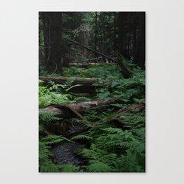 Ferns In The Rainforest Canvas Print