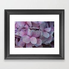 Rainy Hydrangea Beauty Framed Art Print