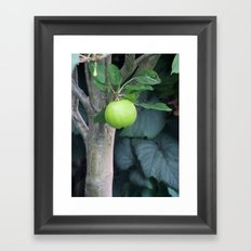 APPLE Framed Art Print