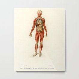 Vintage Anatomical Drawing Metal Print