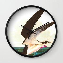 Black Skimmer or Shearwater John James Audubon Vintage Scientific Hand Drawn Illustration Birds Wall Clock