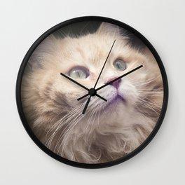 Portrait of an adult Siberian cat. Wall Clock
