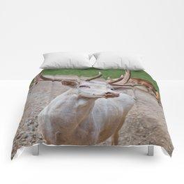 White Fallow Deer Comforters