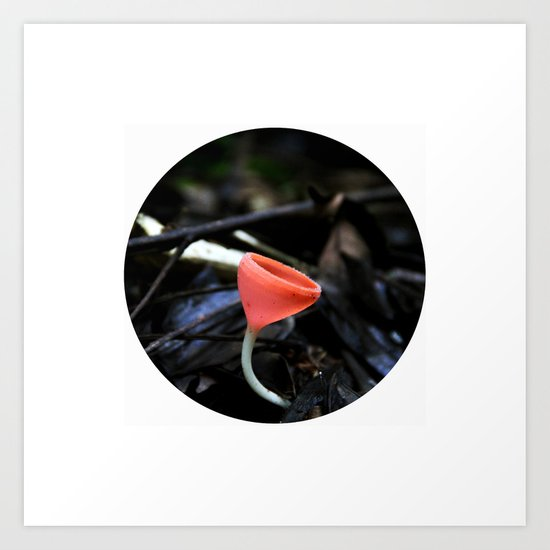 Colombian Forest Mushrooms Art Print