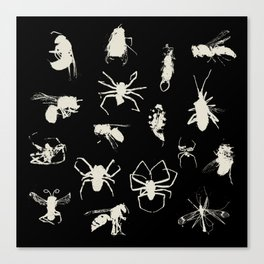 Bugs, wasps, spiders & earwig Canvas Print