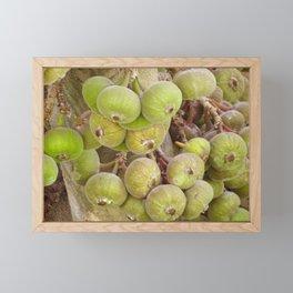 Figs Framed Mini Art Print