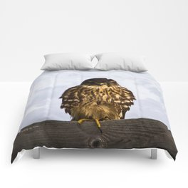 Merlin Falcon Comforters