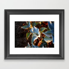 Desert Leaves II Framed Art Print