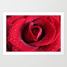 Scarlet Rose  Art Print