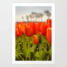 Tulips standing tall Art Print