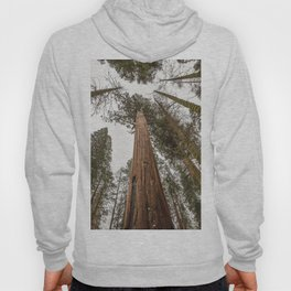 Sequoia Stretch - Nature Photography Hoody