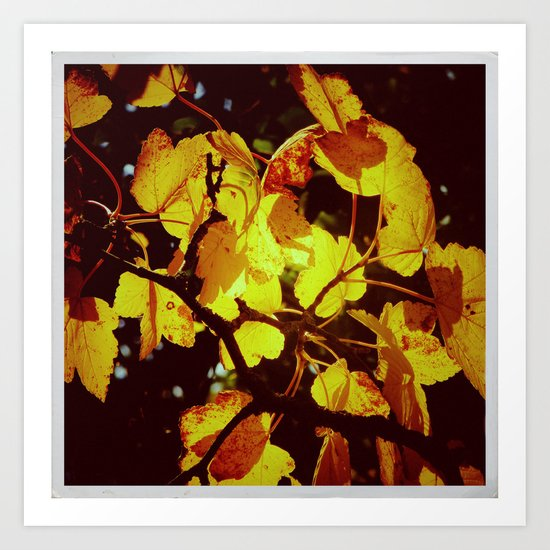 Autumnal#6 Art Print