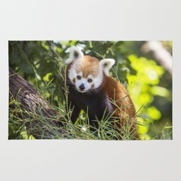 Red Panda in Tree Rug