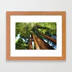 Glorious Redwoods... Framed Art Print