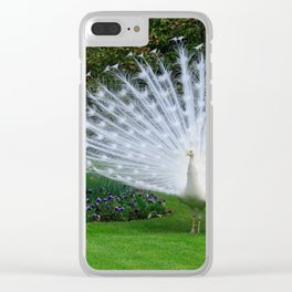 White Peacock on the Green Grass in Spring Clear iPhone Case