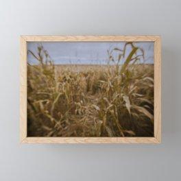 Blur Corn field Framed Mini Art Print