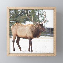 Watercolor Elk Bull 26 Framed Mini Art Print