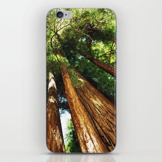 Glorious Redwoods... iPhone & iPod Skin